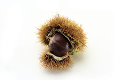 Chestnut in natural shell. Natural chestnut in shell isolated on white background Stock Photography