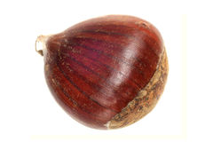 Chestnut nut It is isolated on a white background Royalty Free Stock Photos