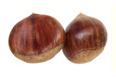 Chestnut nut it is isolated on a white background Royalty Free Stock Photo