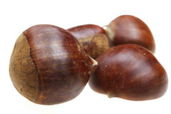Chestnut nut it is isolated on a white background Stock Image