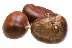 Chestnut nut it is isolated on a white background Royalty Free Stock Images
