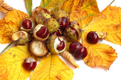 Chestnut nut and leaves Royalty Free Stock Photos