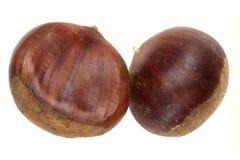 Chestnut nut on a white background Royalty Free Stock Photo