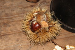 Chestnut in the open shell on wooden table Stock Photos