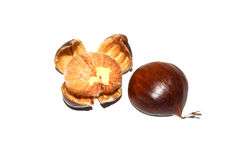Chestnut pictures Stock Photo