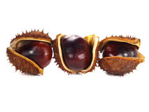 Chestnut pods Royalty Free Stock Photography