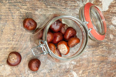 Chestnut in the pot Stock Image