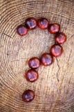 Chestnut question symbol stub. Autumn royalty free stock photo