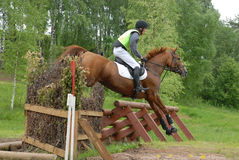 Chestnut red horse jumping. Event: Cup of Russia, Superiority among Young Rider Stock Photography