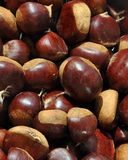 Chestnut reversed Stock Photos