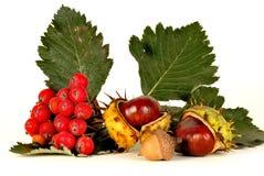 Chestnut and rowan Stock Photo