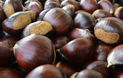 Chestnut. The seed of the tree chestnut, it is edible boiled baked or roasted Stock Photos