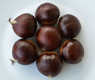 Chestnut. The seed of the tree chestnut, it is edible boiled baked or roasted royalty free stock images