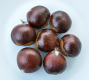 Chestnut. The seed of the tree chestnut, it is edible boiled baked or roasted royalty free stock photos