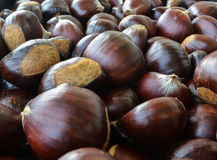 Chestnut. The seed of the tree chestnut, it is edible boiled baked or roasted royalty free stock image