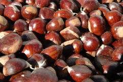 Chestnut for selling Stock Photo