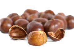 Chestnut Series 01 Royalty Free Stock Photos
