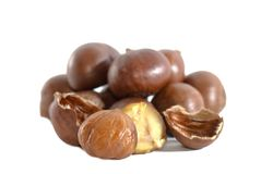 Chestnut Series 02 Royalty Free Stock Photos