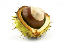 Chestnut in shell Royalty Free Stock Image