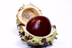 Chestnut single. On white background stock photography