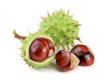 Chestnut in the skin isolated on white background closeup Royalty Free Stock Photos