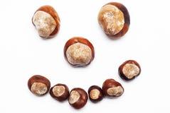 Chestnut smile Stock Image