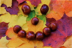 Chestnut smiley with Autumn leaves Royalty Free Stock Photos