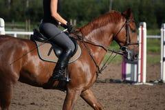 Chestnut sport horse portrait in summer Stock Image