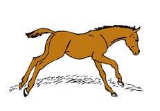 Chestnut Stallion Stock Images