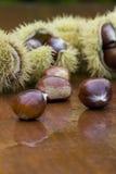 Chestnut still life Stock Images