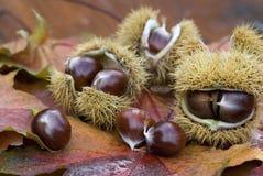 Chestnut still life Royalty Free Stock Photo