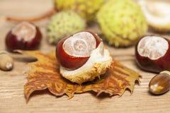Chestnut still life Royalty Free Stock Image