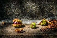 Chestnut still life. Still life with Croatian chestnuts royalty free stock image