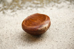 Chestnut on stoned background Royalty Free Stock Images