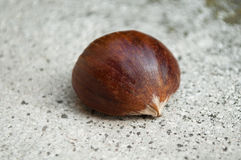 Chestnut on stoned background. Closeup isolated chestnut on stoned background Royalty Free Stock Photos