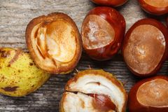 Chestnut on the table. Chestnut on the vintage wooden table stock photography