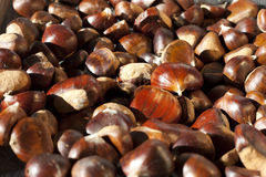 Chestnut texture Royalty Free Stock Images