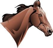 Chestnut thoroughbred trotter Stock Images