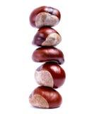 Chestnut tower Stock Image