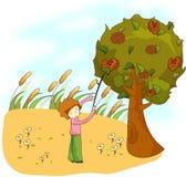 Chestnut tree Royalty Free Stock Photography