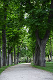 Chestnut tree along the way in a park. Walking in the park with chestnut tree along the way Stock Photo
