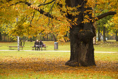 Chestnut Tree in Autumn Park Royalty Free Stock Photos