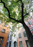 Chestnut tree and buildings Stock Photography