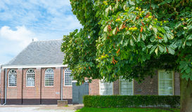 Chestnut tree outside a church in sunlight Royalty Free Stock Images