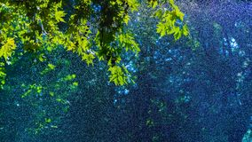 Summer Showers. Chestnut tree under shower from a nearby sprinkler on a hot summer day stock photography