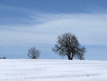 Chestnut tree in winter (Aesculus hippocastanum), Germany Royalty Free Stock Photo
