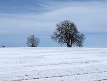 Chestnut tree in winter, Germany Stock Images