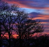 Chestnut trees before dawn, early spring Royalty Free Stock Images