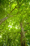 Chestnut trees dynamic view Royalty Free Stock Image