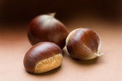 Chestnut Trio on Brown Tone Background. Three chestnuts with limited depth of field Stock Images